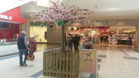cherry tree in Mahon